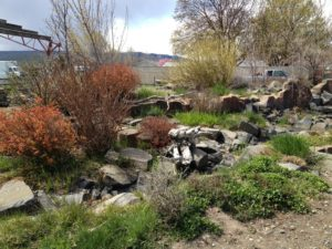 Rocky Garden at Dustys